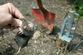 Mole Control, Traps Work